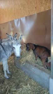 Besuch im Stall