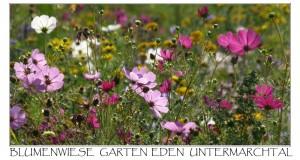 Postkarte Blumenwiese 1